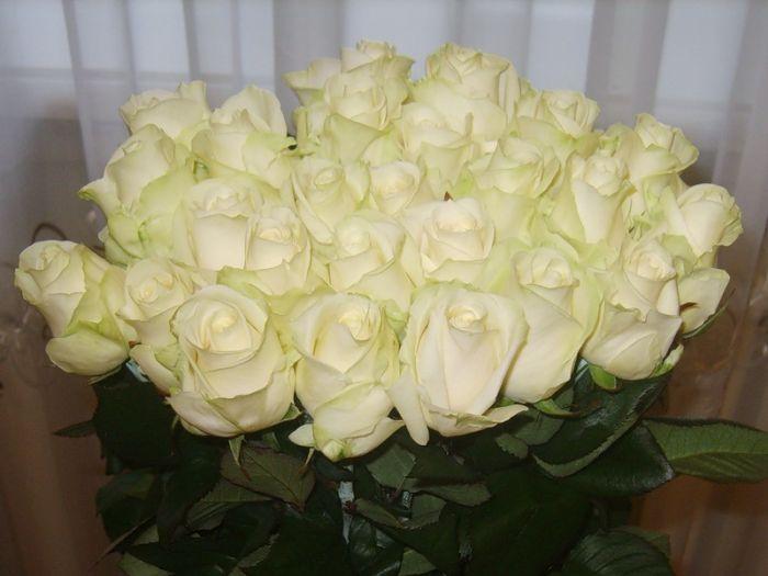 первых можно фото цветов букетов роз дома перевозки пассажиров